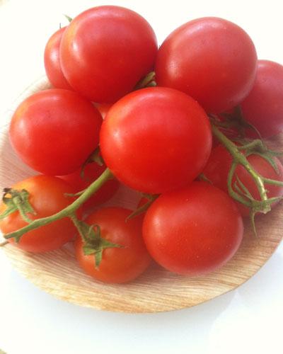 אשכול עגבניות שרי
